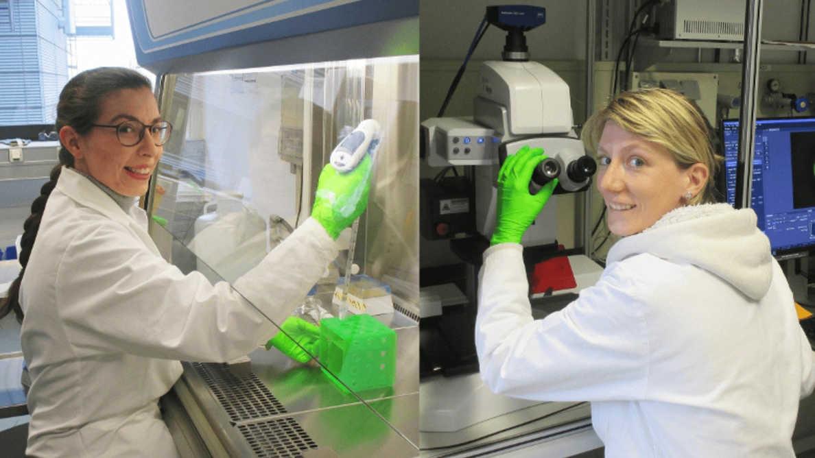 Tutkijat ja hammaslääkärit yhdistävät voimansa paikkausmateriaalien kestävyyden parantamiseksi